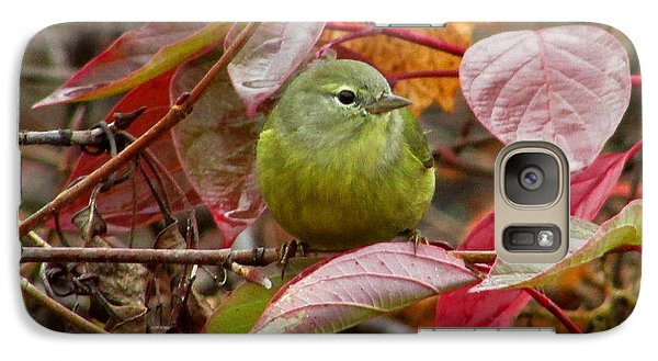 Galaxy Case featuring the photograph Orange Crowned Warbler by Kimberly Mackowski