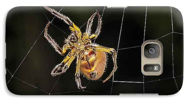 Orb-weaver Spider In Web Panguana Galaxy S7 Case by Konrad Wothe