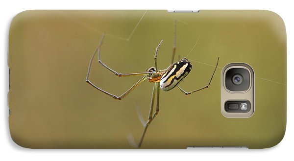 Galaxy Case featuring the photograph Orchard Spider by Greg Allore