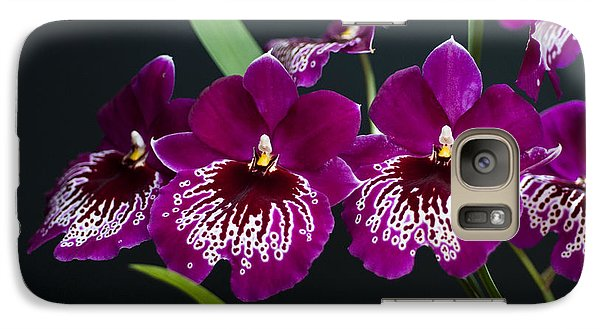 Galaxy Case featuring the photograph Orchid Miltonia by Lana Enderle