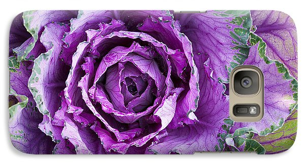 Ornamental Cabbage Galaxy S7 Case by Tim Gainey