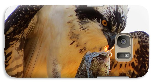 Galaxy Case featuring the photograph Osprey Breakfast by Dianne Cowen
