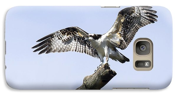 Galaxy Case featuring the photograph Osprey Pride  by David Lester