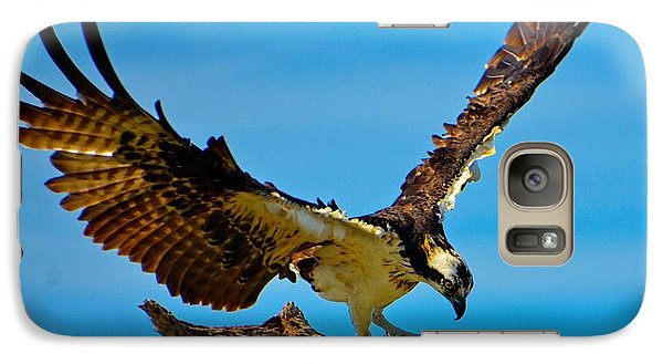 Galaxy Case featuring the photograph Osprey Spreading It's Wings by Pamela Blizzard