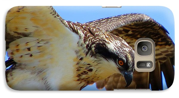 Galaxy Case featuring the photograph Osprey Youth by Dianne Cowen