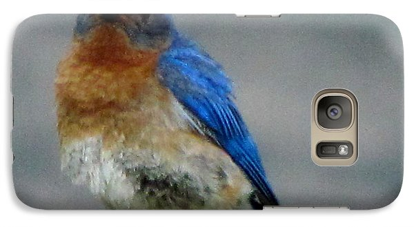 Galaxy Case featuring the photograph Our Own Mad Bluebird by Betty Pieper