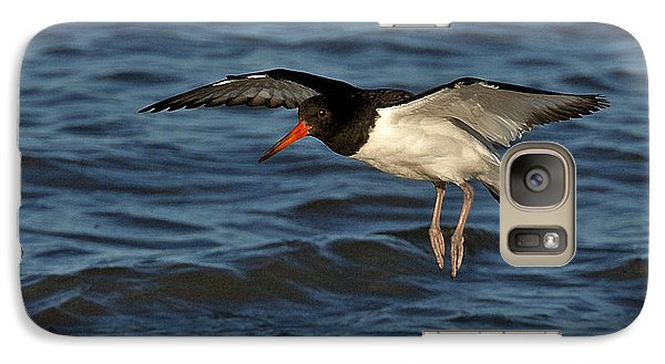 Galaxy Case featuring the photograph Oystercatcher by Paul Scoullar
