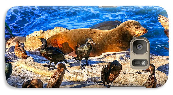 Galaxy Case featuring the photograph Pacific Harbor Seal by Jim Carrell