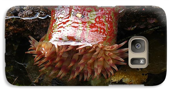 Galaxy Case featuring the photograph Painted Anemone by Gayle Swigart