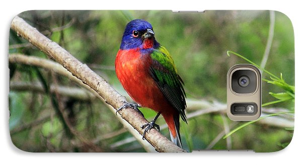 Galaxy Case featuring the photograph Painted Bunting Photo by Meg Rousher