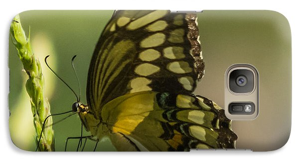 Galaxy Case featuring the photograph Palamedes Swallowtail by Jane Luxton