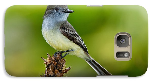 Pale-edged Flycatcher Galaxy Case by Anthony Mercieca