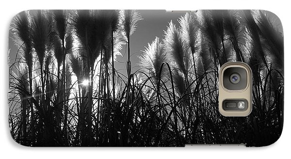 Galaxy Case featuring the photograph Pampas Grass Tufts In Silhouette  by Garnett  Jaeger