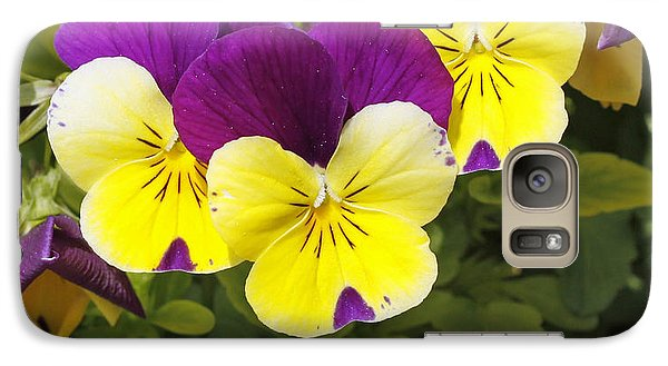 Galaxy Case featuring the photograph Pansies by Denise Pohl