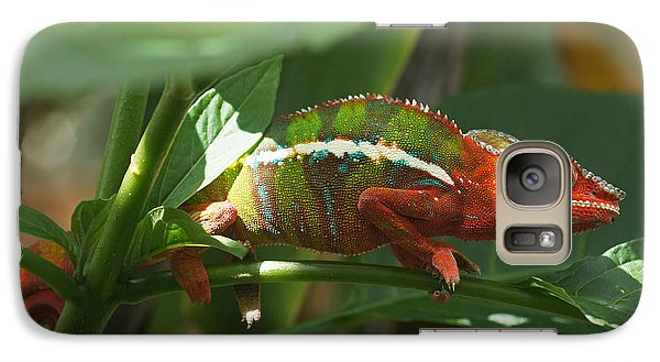 Galaxy Case featuring the photograph Panther Chameleon Madagascar 1 by Rudi Prott