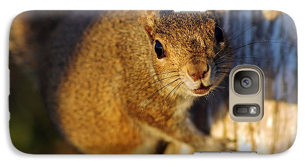 Galaxy Case featuring the photograph Park Squirrel II by Daniel Woodrum