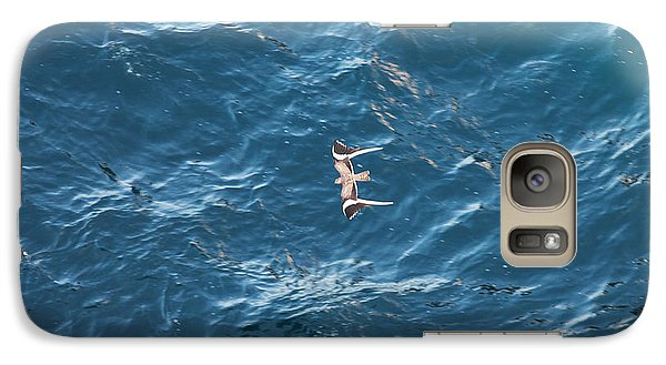 Galaxy Case featuring the photograph Penant Winged Nightjar 1 by Gregory Daley  PPSA