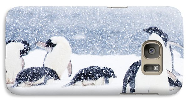 Penguins In The Snow Galaxy Case by Carol Walker