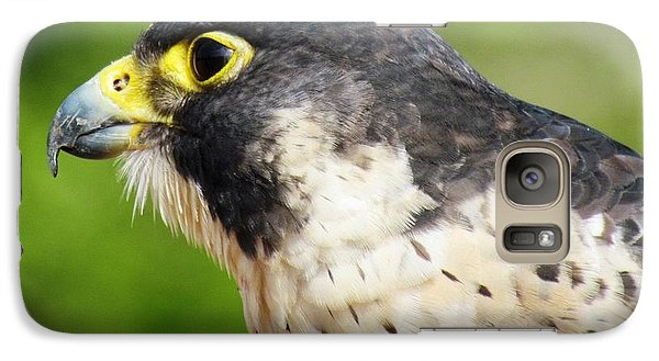 Galaxy Case featuring the photograph Peregrine Falcon by Cynthia Guinn
