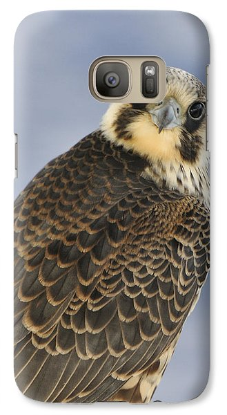 Peregrine Falcon Looking At You Galaxy S7 Case
