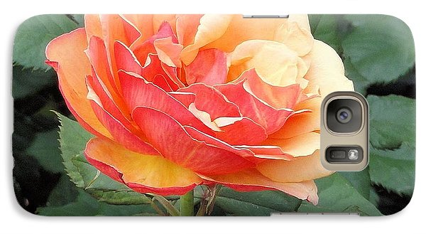 Galaxy Case featuring the photograph Perfect Rose by Janette Boyd