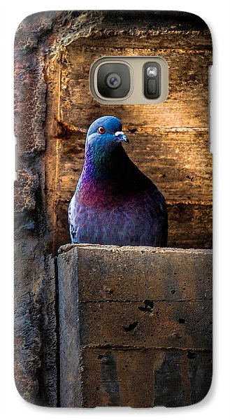Pigeon Galaxy S7 Case - Pigeon Of The City by Bob Orsillo