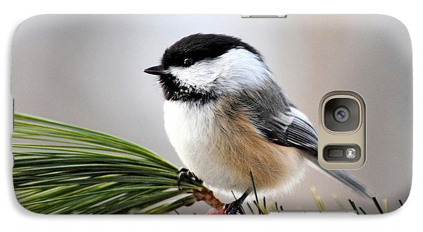 Pine Chickadee Galaxy S7 Case