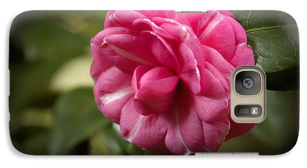 Galaxy Case featuring the photograph Pink And White Stripped Camellia by Penny Lisowski