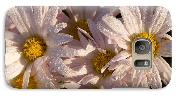 Galaxy Case featuring the photograph Pink And Yellow Mums by Wanda Brandon