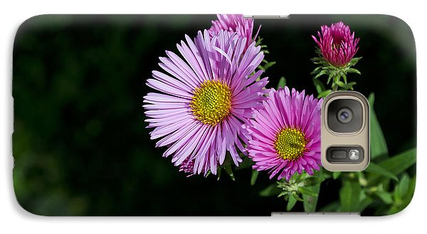 Galaxy Case featuring the photograph Pink Asters On Black by Maria Janicki