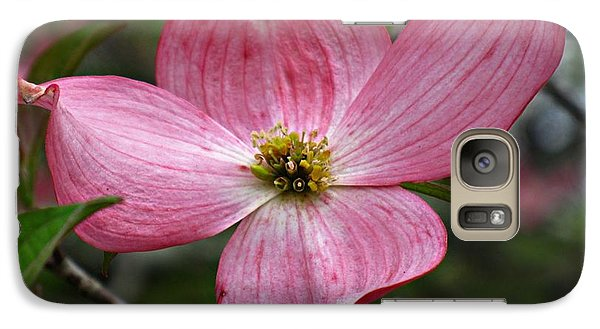 Galaxy Case featuring the photograph Pink Flowering Dogwood by William Tanneberger
