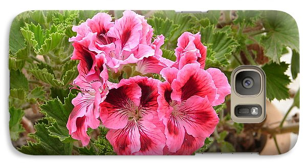 Galaxy Case featuring the photograph Pink Geraniums by Lew Davis