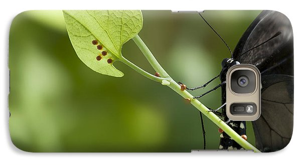 Galaxy Case featuring the photograph Pipevine Swallowtail Mother With Eggs by Meg Rousher