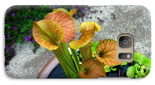 Galaxy Case featuring the photograph Pitcher Plants by Allen Carroll