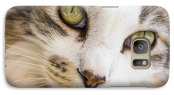 Galaxy Case featuring the photograph Pixie-bob 1 by Leigh Anne Meeks