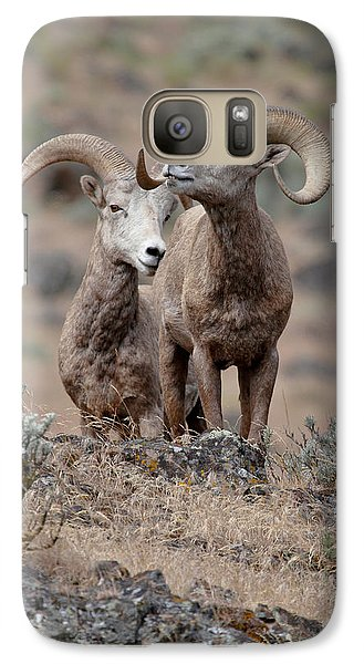 Galaxy Case featuring the photograph Playfull Rams by Athena Mckinzie