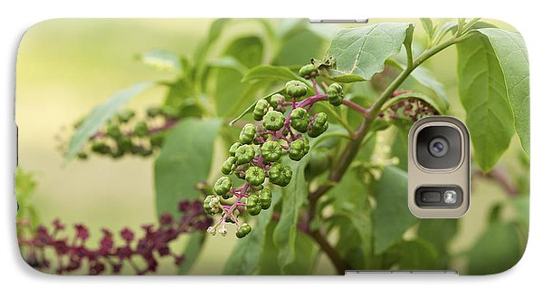 Galaxy Case featuring the photograph Pleasing To The Eye - Pokeweed Vine Art Print by Jane Eleanor Nicholas