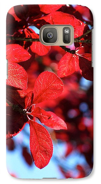 Galaxy Case featuring the photograph Plum Tree Cloudy Blue Sky 2 by CML Brown