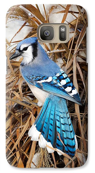 Bluejay Galaxy S7 Case - Portrait Of A Blue Jay by Bill Wakeley