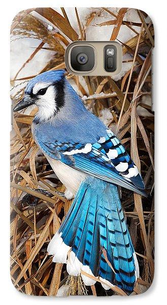 Portrait Of A Blue Jay Galaxy Case by Bill Wakeley