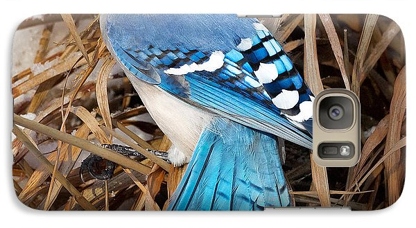 Portrait Of A Blue Jay Square Galaxy S7 Case by Bill Wakeley