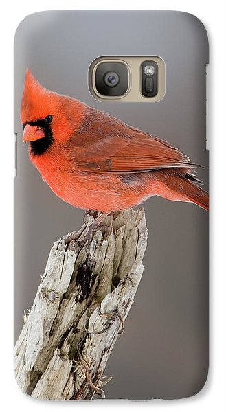 Galaxy Case featuring the photograph Portrait Of A Cardinal by Timothy McIntyre