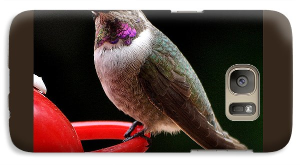 Galaxy Case featuring the photograph Pregnant Female Caliope With Purple Throat by Jay Milo