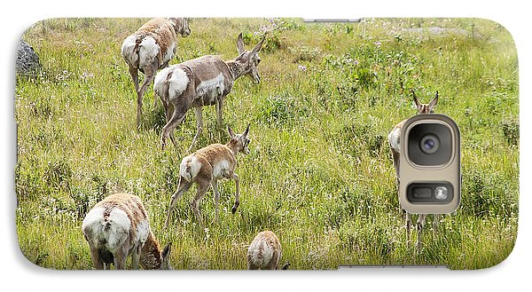 Galaxy Case featuring the photograph Pronghorn Antelope In Lamar Valley by Belinda Greb