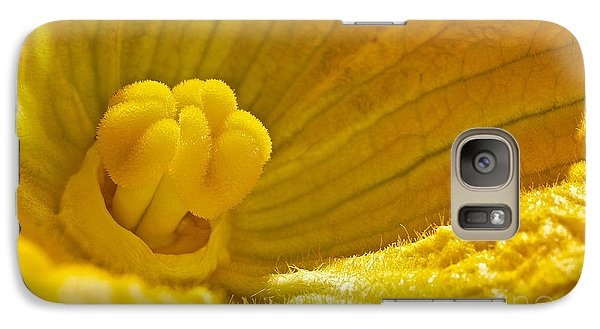 Galaxy Case featuring the photograph Pumpkin Blossom by Linda Bianic