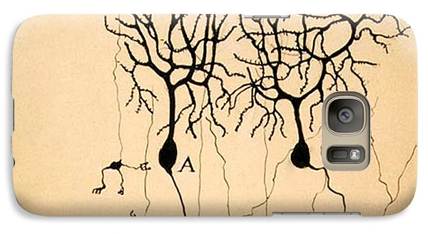 Pigeon Galaxy S7 Case - Purkinje Cells By Cajal 1899 by Science Source