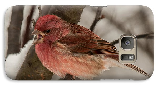 Galaxy Case featuring the photograph Purple Finch Bird Song by Lara Ellis