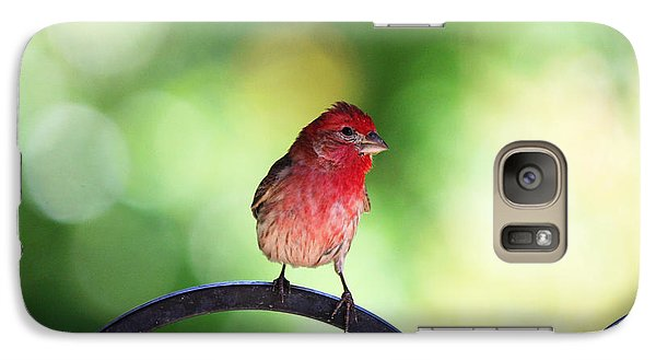 Galaxy Case featuring the photograph Purple Finch by Trina  Ansel