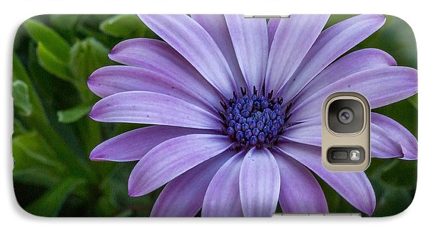 Galaxy Case featuring the photograph Purple Flower  by Trace Kittrell