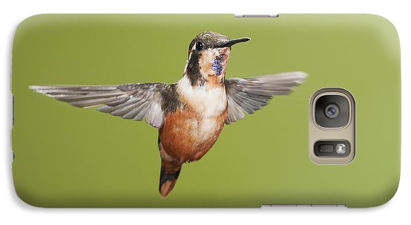 Galaxy Case featuring the photograph Purple-throated Woodstar Hummingbird by Dan Suzio